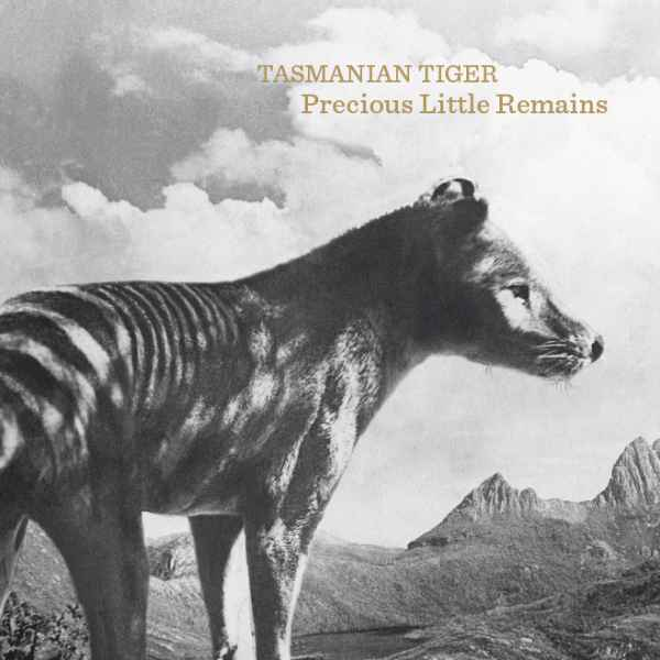 Tasmanian Tiger – Precious Little Remains